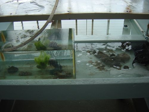 Matthew_This is our collection tank