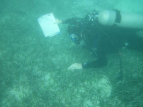 Peter diving to do transects