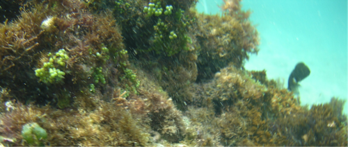 Taylor and Ali_ Species richness of coral patches